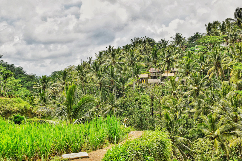 Beautiful Bali Green Backdrop