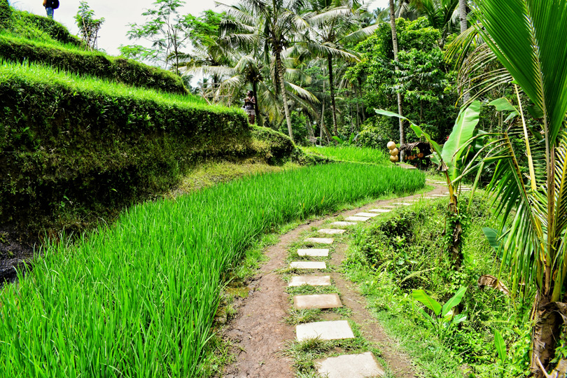 So Much green in bali