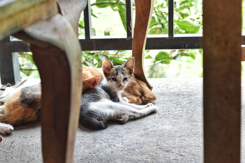 a stray cat in bali
