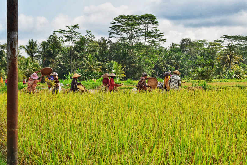 rice farmers in Bali